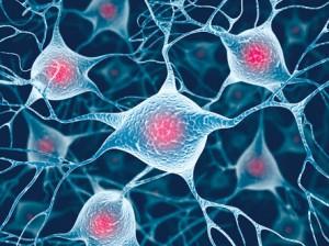 脳神経細胞