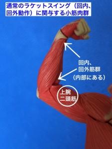 回内・回外動作で使う筋肉群
