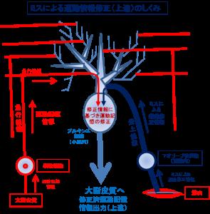 プルキンエ細胞